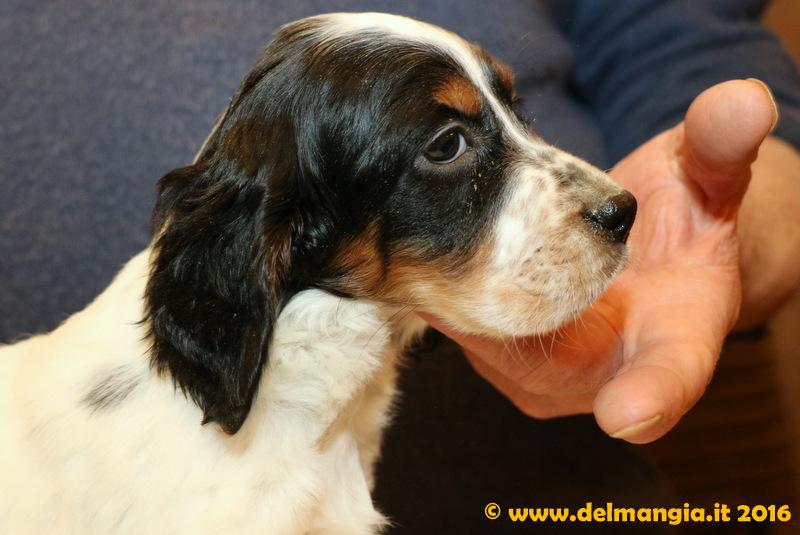 clicca qui per vedere le altre foto dei cuccioli